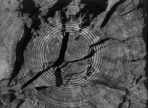 circle 06